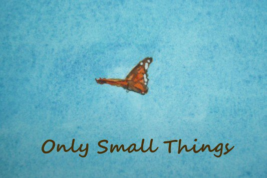 Only Small Things